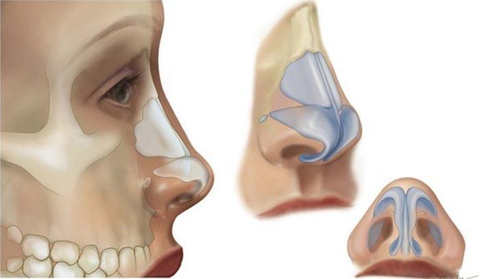 anatomibinii